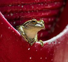 Floridian Frog In Vase  by NydiaSRobles