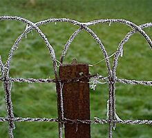 Frozen fence by mindfulmimi