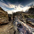 Dead Wood by Azza