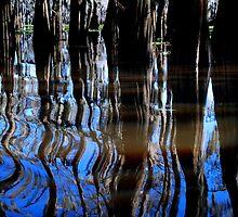Swamps by Mark Bauschke