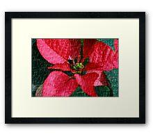 Flower For The Holidays Framed Print