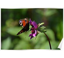 Butterfly and Flower Poster