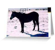 Zoe Filly Merry X-mass Greeting Card