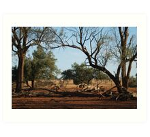Outback NSW Art Print