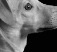 Day dreamer Puppy Sticker