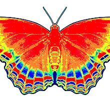 Colorful Butterfly - Red by Jean Gregory  Evans