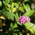 Rainforest blooms by kossimarsalsa