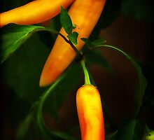 Peppers by Kathy Nairn