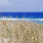 Dunes by Mary Canning