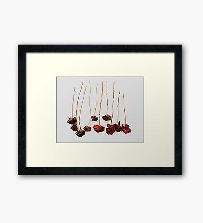 Ten Roses Framed Print
