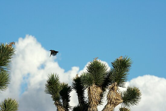 Cactus Wren, NV by Chris Clarke
