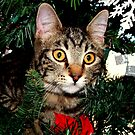 A Christmas Tree isn't for Climbing ? by Jan  Tribe