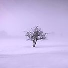 Isolation by miradorpictures