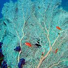 Sea Fan by lilithlita