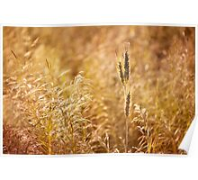 Golden cereal plant photo Poster