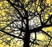 Winter Tree Yellow Sky by Scott Chalmers