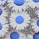 Daisies in Blue by debsdesigns