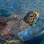 Turtle by Sherry Lynn Crawford