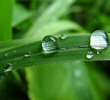 just a drop will dew it by michelle bergkamp