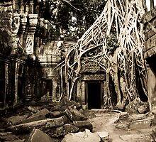 Tomb Raider (Ta Prohm, Siem Reap, Cambodia) by Matthew Stewart