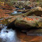 River Wilderness by Jane Best