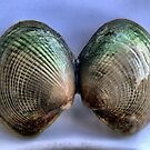 Queenstown - Shells from my Chowder by Larry Lingard-Davis