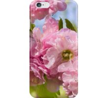 Almond blossoms pink flowering iPhone Case/Skin