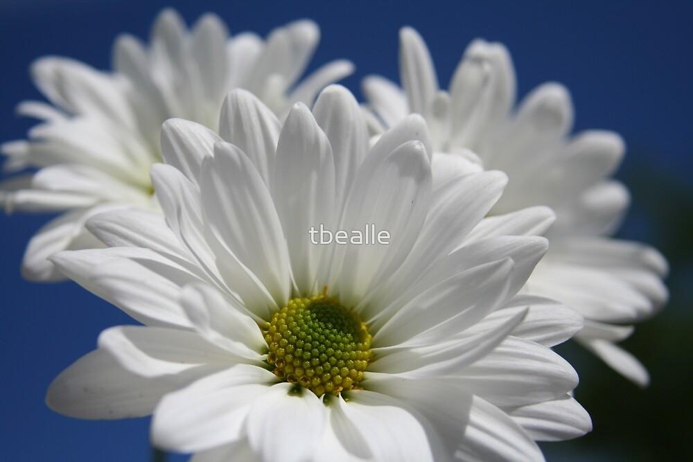 ~Blooming Angels Wings~ by Terri~Lynn Bealle