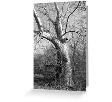 TREE & OUTHOUSE Greeting Card