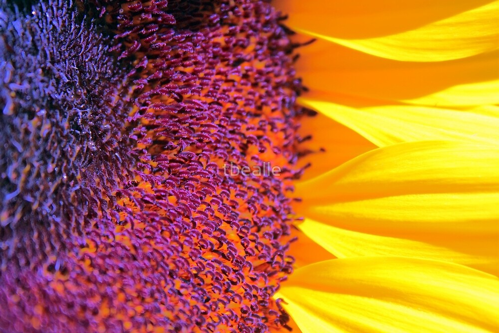 ~you are my sunshine~ by Terri~Lynn Bealle