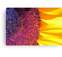 ~you are my sunshine~ Canvas Print