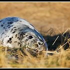 Grey seal pup at Donna Nook by Shaun Whiteman