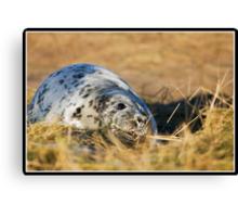 Grey seal pup at Donna Nook Canvas Print