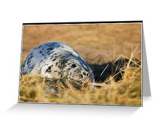 Grey seal pup at Donna Nook Greeting Card