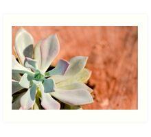 Succulent Plant outside Art Print
