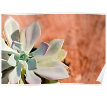 Succulent Plant outside Poster