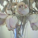 Faded Roses  by Karen E Camilleri