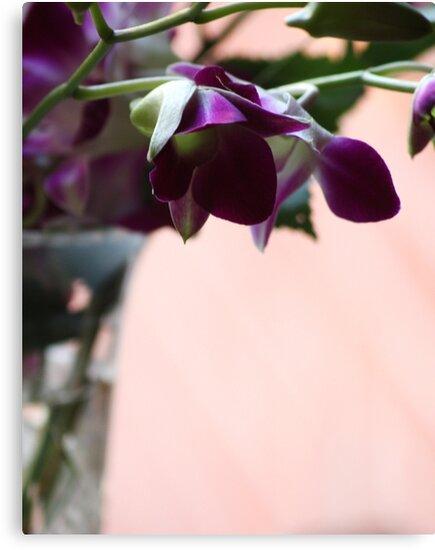 Singapore Orchids by Karen E Camilleri