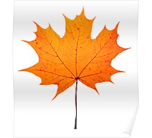 autumn maple-leaf Poster