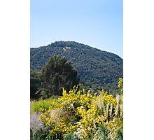 Sonoma California Vineyard Grounds Photographic Print