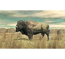 American Buffalo Photographic Print