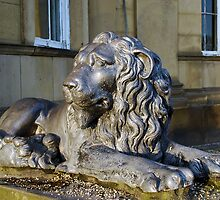 Lion by shakey