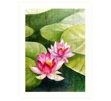 Waterlillies Art Print