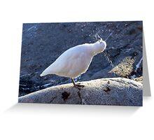 Snowy Sheathbill Greeting Card