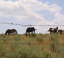 Barbed Wire Horses by kerplunk