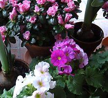 Azaleas and Primrose II by Liesl Gaesser
