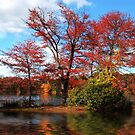 Wellesley, MA by LudaNayvelt