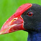 Swamp Hen  by Brett Darby