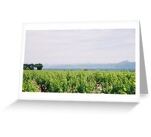 Provence Spring Vineyard Greeting Card