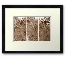 Parsley Heads - Triptych Framed Print